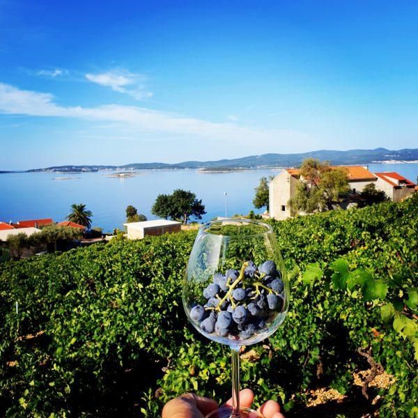 Wine resort Adriatic Mikulic